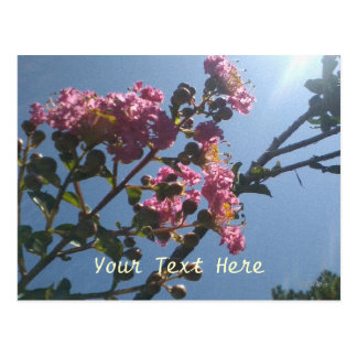 Frilly Pink Flowers Natural Botanical Postcard