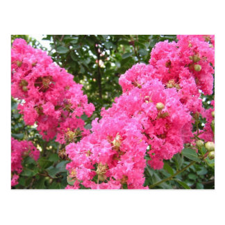 Frilly Pink Flowers Postcard