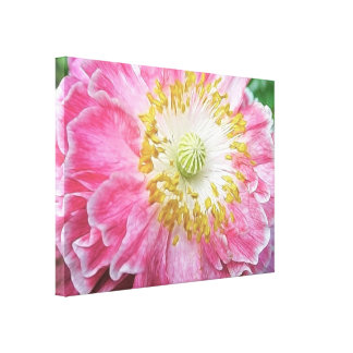 Frilly Pink Poppy Canvas Print