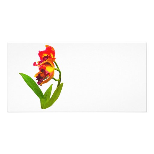 Frilly Red and Yellow Orchids Customized Photo Card