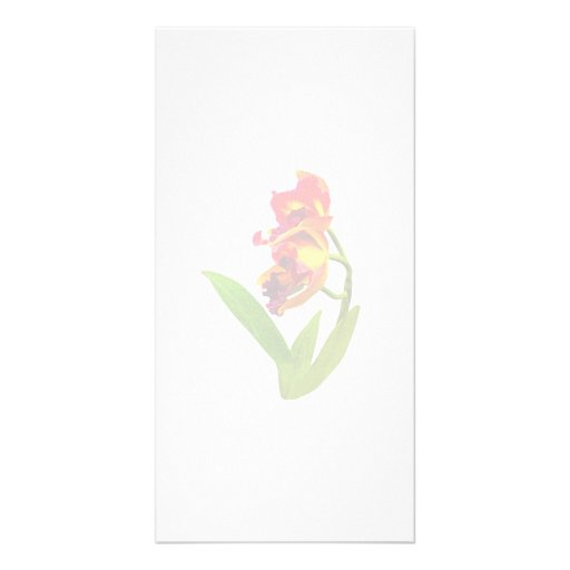 Frilly Red and Yellow Orchids Photo Cards