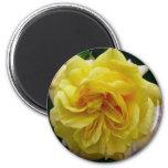 frilly yellow rose fridge magnet