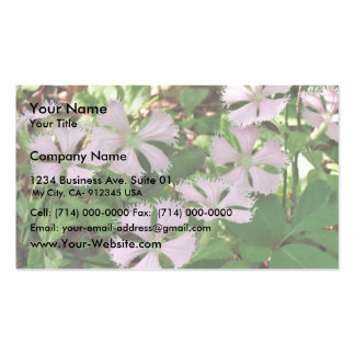 Fringed campion in full flower, endangered Silene Business Cards