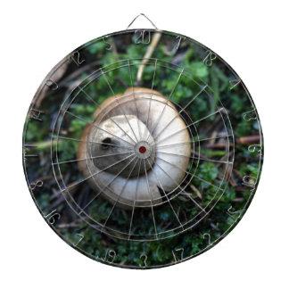 Fringed earthstar (Geastrum fimbriatum) Dartboard