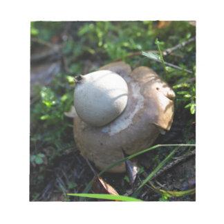 Fringed earthstar (Geastrum fimbriatum) Notepad