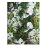 Fringed Prairie Orchids Post Card