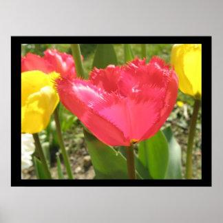 Fringed Tulips Print