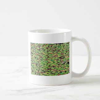 Fringed water lily  flowers mugs