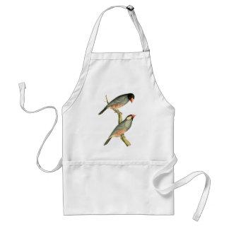 Fringilla oryzivora birds adult apron