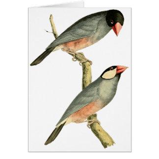 Fringilla oryzivora birds greeting card
