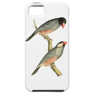 Fringilla oryzivora birds iPhone 5 case