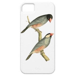 Fringilla oryzivora birds iPhone 5 covers