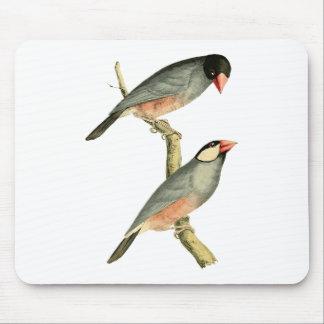 Fringilla oryzivora birds mouse pad