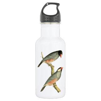 Fringilla oryzivora birds 18oz water bottle