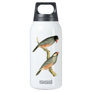 Fringilla oryzivora birds 10 oz insulated SIGG thermos water bottle