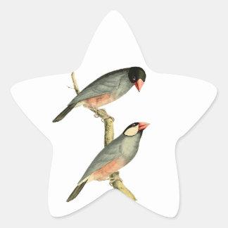 Fringilla oryzivora birds star sticker