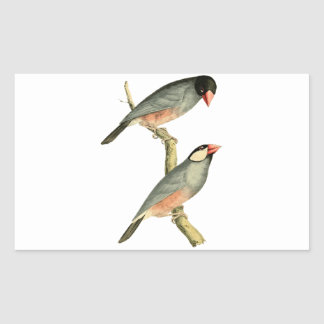 Fringilla oryzivora birds rectangular sticker