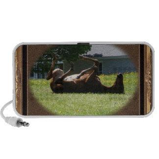Frisky Foal ~ speaker