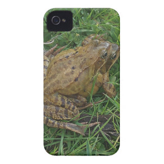 Frisky Frogs BlackBerry Bold Case-Mate Barely Ther