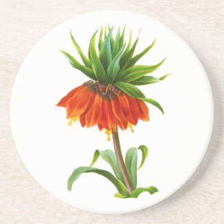 Fritillaire Imperiale by Pierre Joseph Redoute Drink Coaster