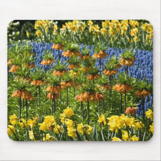 Fritillaria Imperialis & Daffodils DSC0811 Mouse Pad