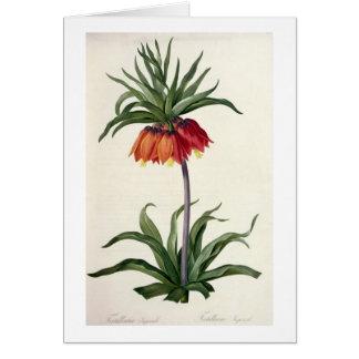 """Fritillaria Imperialis de, """"Les Lilacees"""", 1802- Tarjeta De Felicitación"""