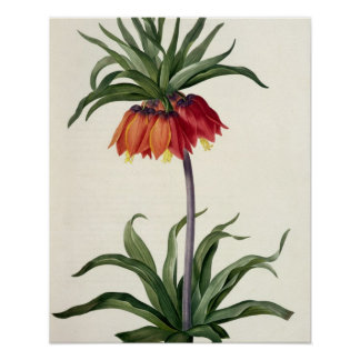 Fritillaria Imperialis from, `Les Lilacees', 1802- Poster