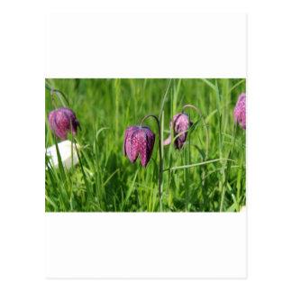 Fritillaria meadow postcard