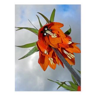Fritillaria Postcard