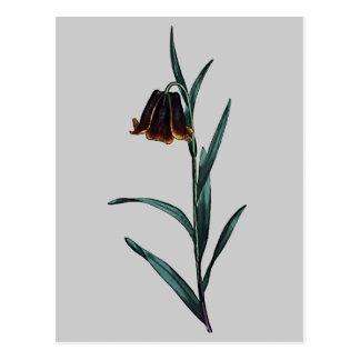 Fritillaria Pyrenaica Postcard
