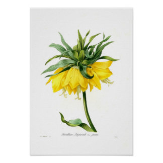 Fritillary amarillo impresiones