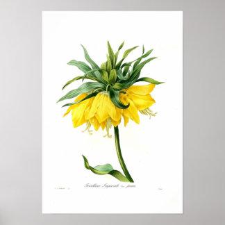 Fritillary amarillo póster