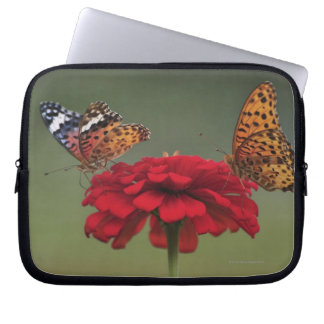 Fritillary Butterfly (Argyreus hyperbius) on 2 Computer Sleeve