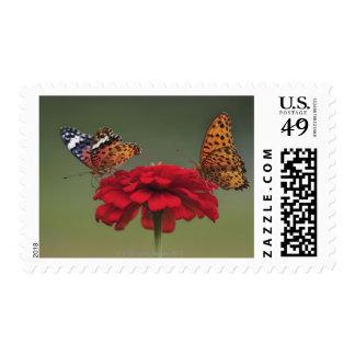 Fritillary Butterfly (Argyreus hyperbius) on 2 Postage Stamp
