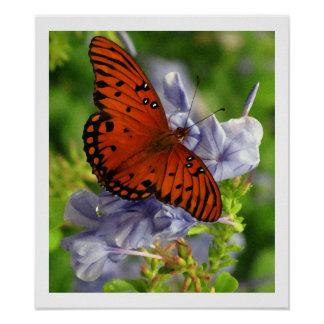 Fritillary Butterfly, Blue FLowers - Artistic Poster