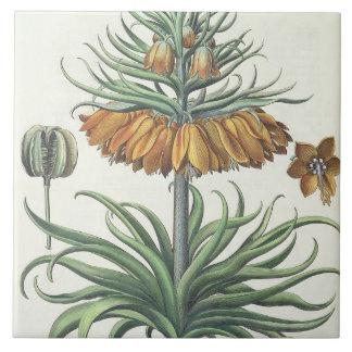 Fritillary: Classe del florum de Imperialis de la  Azulejo Cuadrado Grande