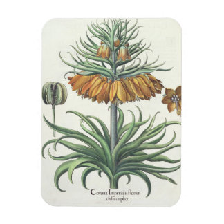 Fritillary: Classe del florum de Imperialis de la  Imanes Flexibles