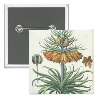 Fritillary: Classe del florum de Imperialis de la  Pin Cuadrado