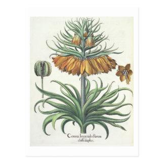 Fritillary: Classe del florum de Imperialis de la Tarjeta Postal