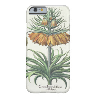Fritillary: Corona Imperialis florum classe duplic Barely There iPhone 6 Case