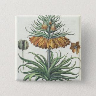 Fritillary: Corona Imperialis florum classe duplic Button
