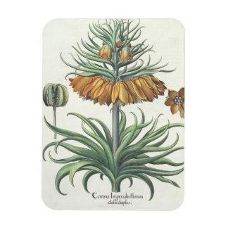 Fritillary: Corona Imperialis florum classe duplic Magnet