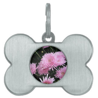 Frizzly Pink Pet Tag