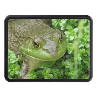 frog-1.jpg tapa de tráiler