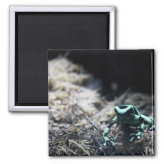Frog 2 Inch Square Magnet