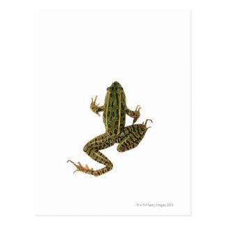 Frog 2 postcard