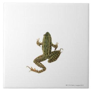 Frog 2 ceramic tiles