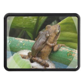 frog-44.jpg tapa de remolque