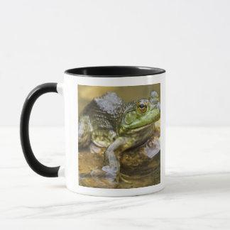 Frog along the Buffalo River, Mile 126 on the Mug