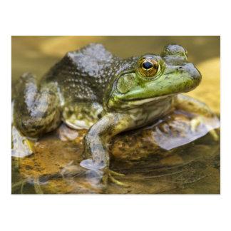 Frog along the Buffalo River, Mile 126 on the Postcard